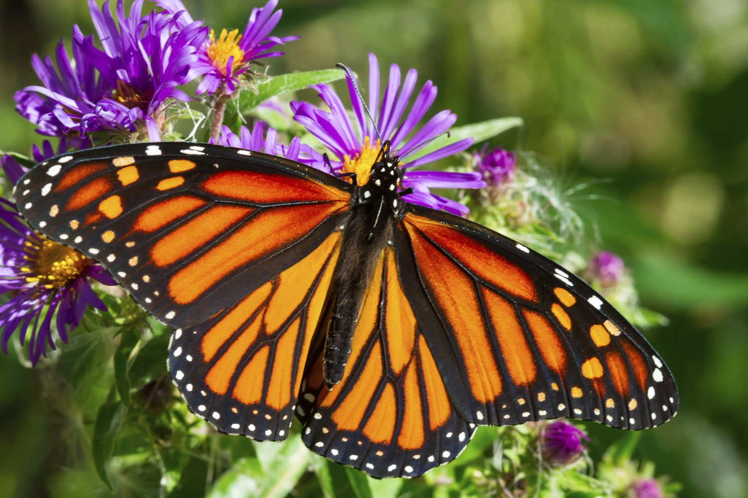 Butterfly Gallery: Everything You Need To Know About The Ridges Sanctuary