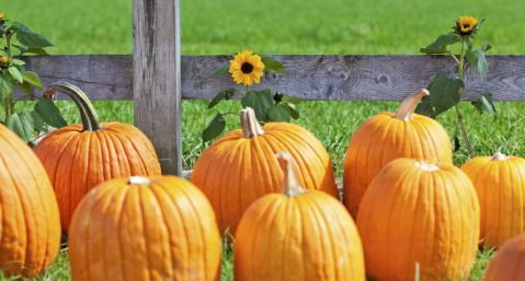pumpkin patch festival in egg harbor