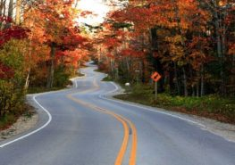 Winding road with autumn leaves